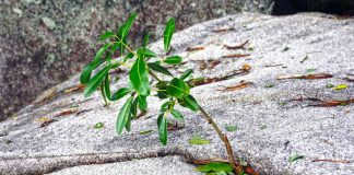 The Earth Perseveres -- You Can, Too